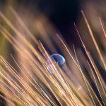 Bulle sur les blés